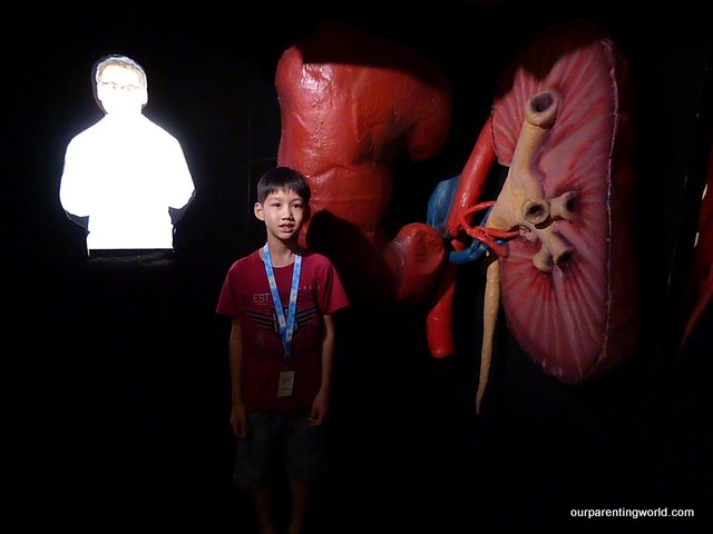 Larger-than-life Human Body Experience (HBX) exhibition at Science Centre Singapore, Our Parenting World